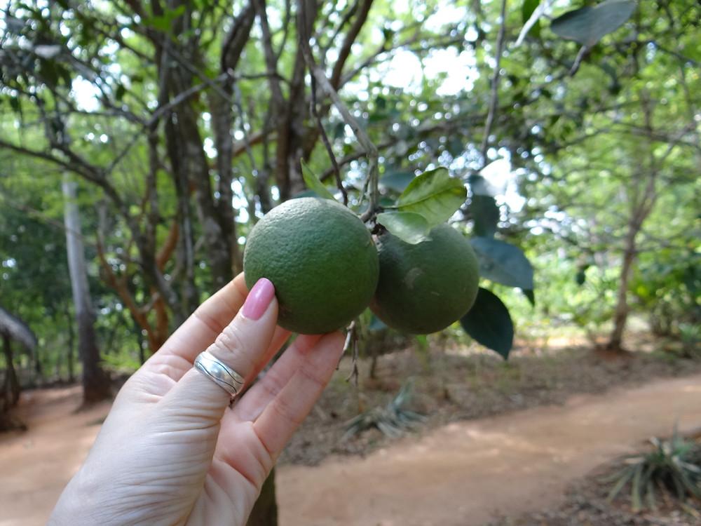Spice Farm - Zanzibar
