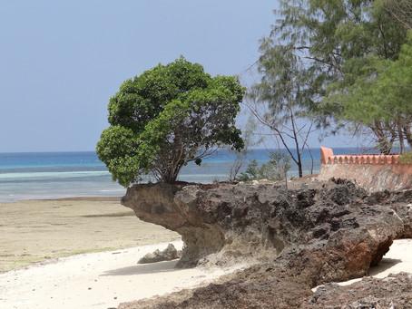 Zanzibarskie opowieści - Prison Island.
