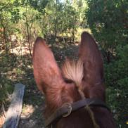 Mule's eye view