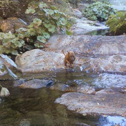 Creek near Gamble Rd