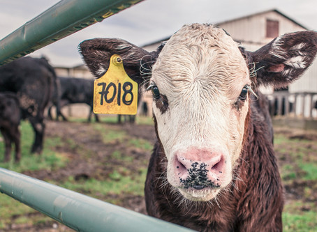Livestock Processing Myths and Misconceptions