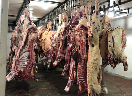 What is Happening in The Beef Industry: A Packer's View on mCOOL and The Beef Shortage