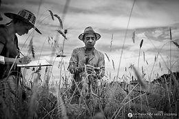 Agronomie paysanne : fondement et pratique