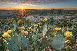 Texas Wildflowers - Four Horses in a Field of Bluebonnets 2.jpg