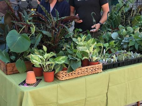Business Spotlight: Cultivaire Plant Store