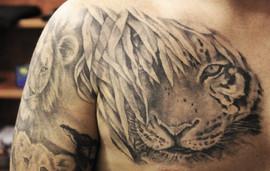 tiger_24350388483_o.jpg