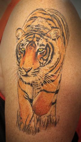 tiger_16046438506_o.jpg