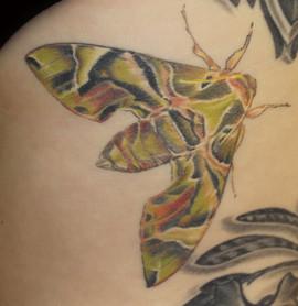 camouflage-moth_14643672475_o.jpg