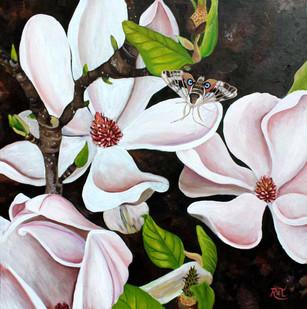 Magnolia & Sphinx Moth