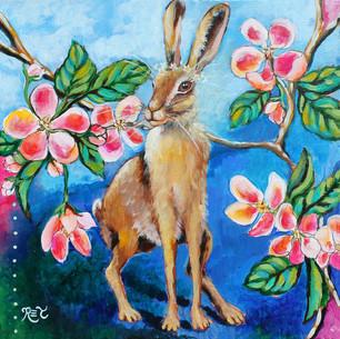 Sweet Wild Hare