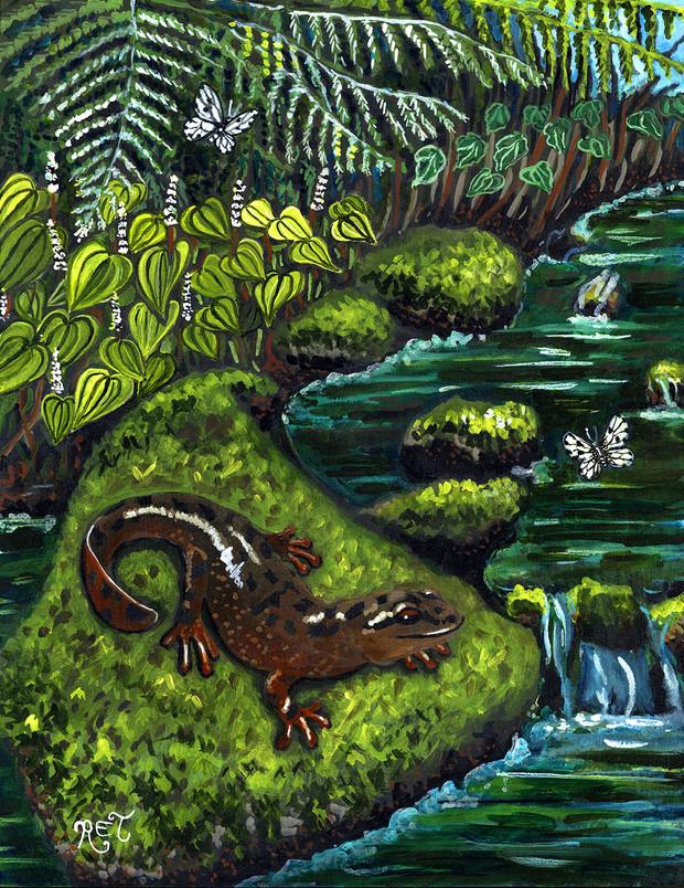 Pacific Giant Salamander