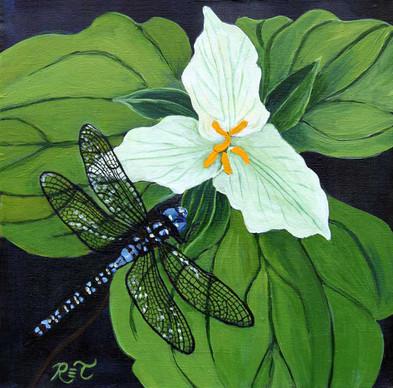 Dragonfly & Trillium