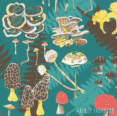 Mushrooms & Ferns