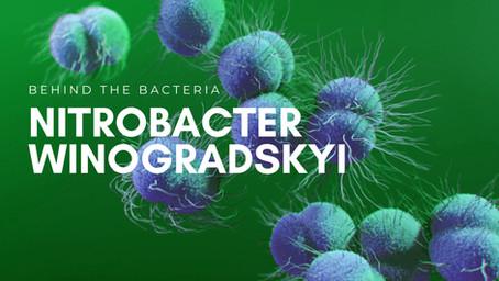 Nitrobacter Winogradskyi