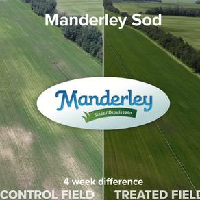 Manderley Turf Case Study