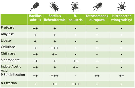 Bacteria%20Function%20Fingerprint_edited