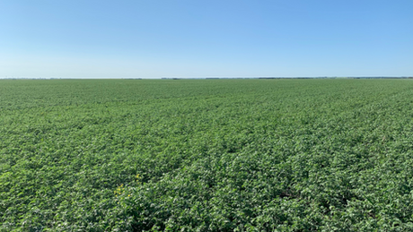 Producer Trades Fungicide For Biology