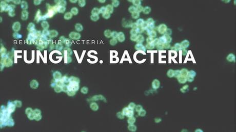 Fungi vs Bacteria