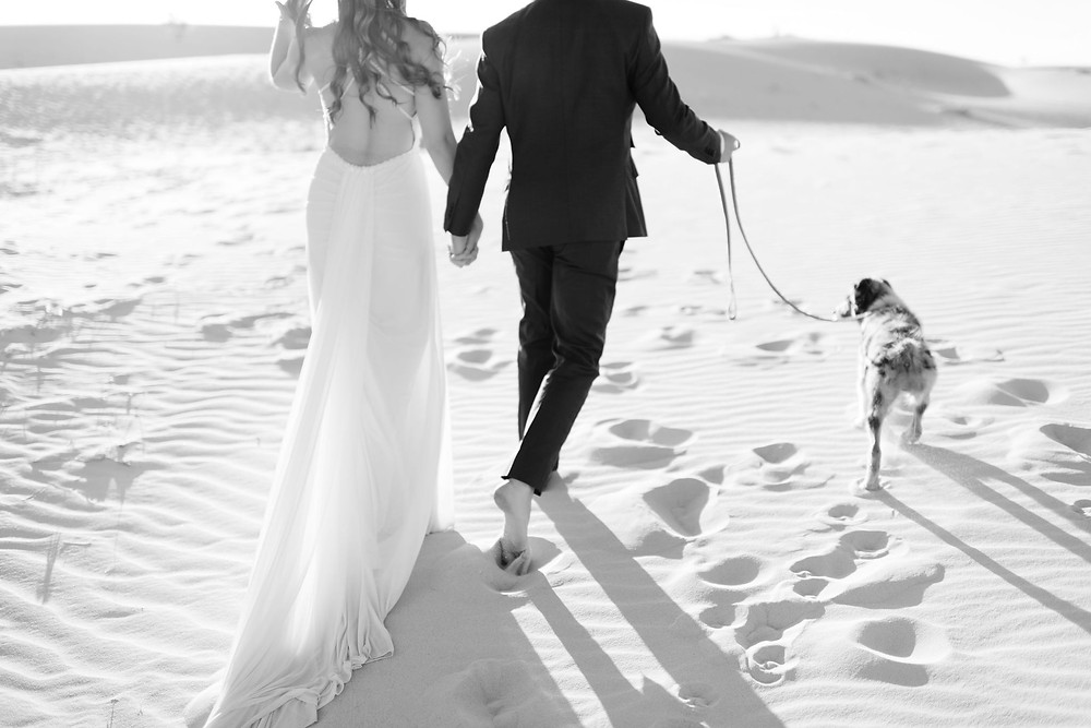couple is holding hands walking away from the camera with their dog on leash. The top of the frame crops the photo so that you cannot see above their shoulders. The brides dress is dragging in the sand and the groom is barefoot