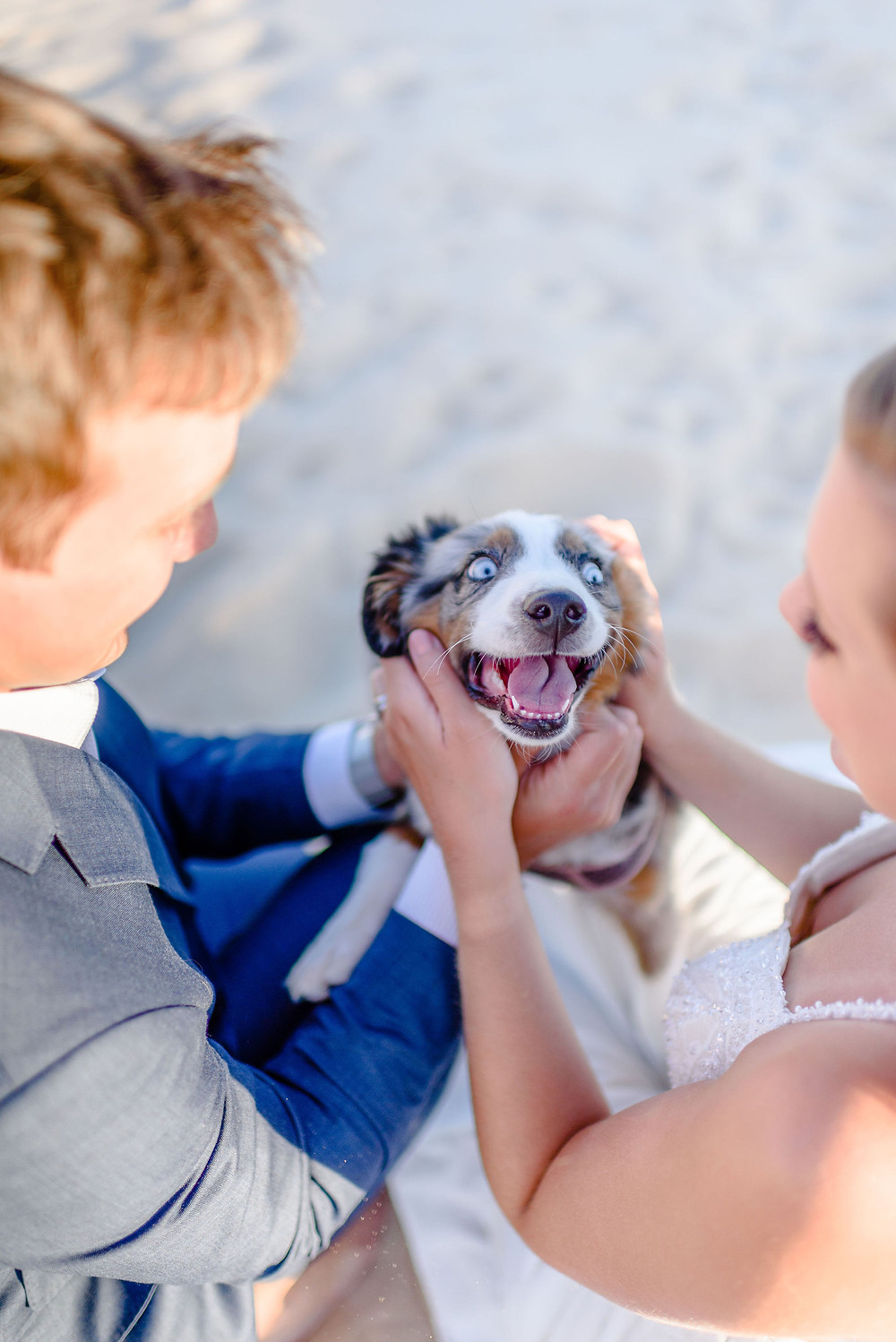 photo of the dog's face between the couple. You cannot see the couple as they are cropped out and also the angle is coming from behind them. The dog looks very happy and has his tongue out while the owners pet him