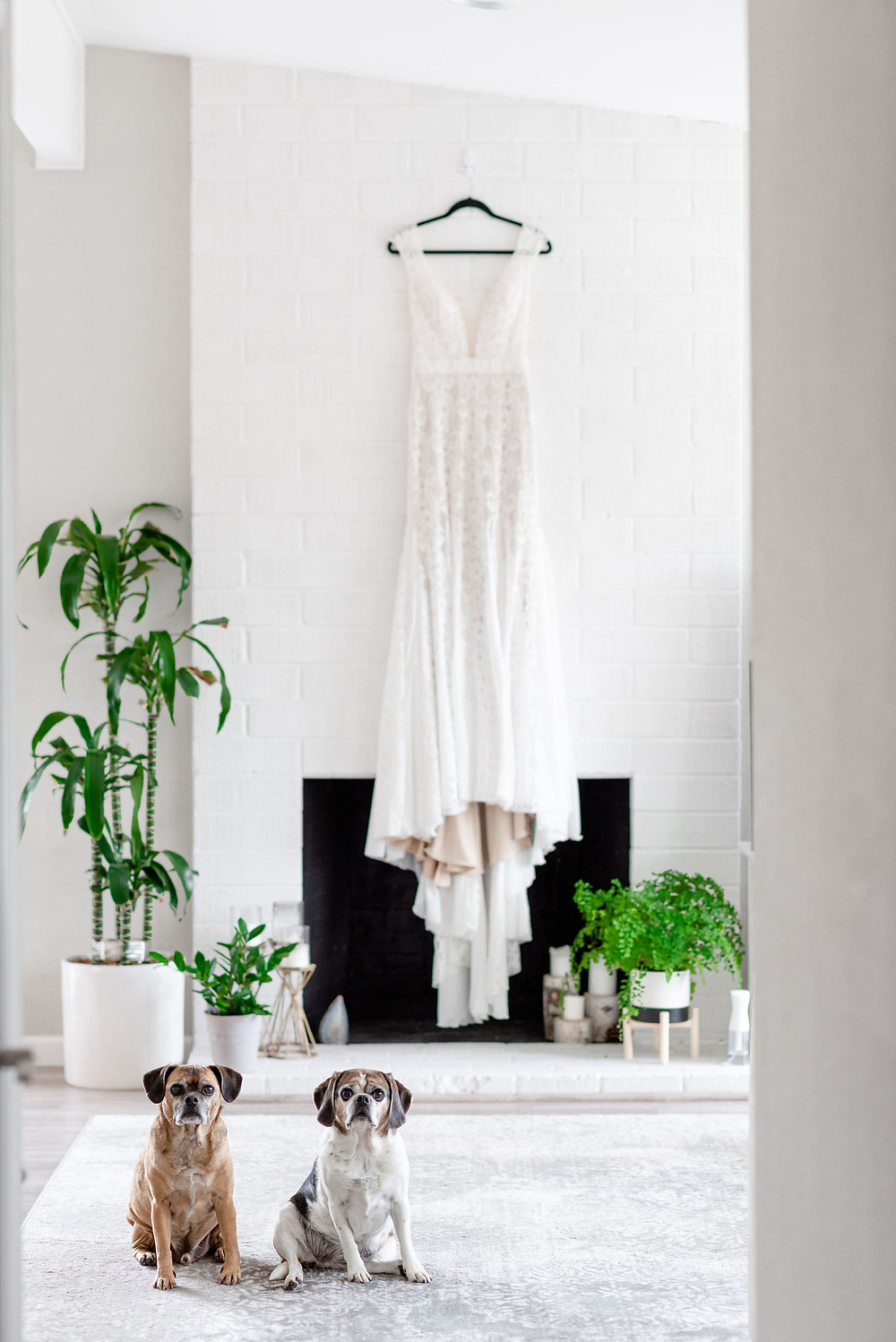 wedding dress hung up with dogs posing in front of it