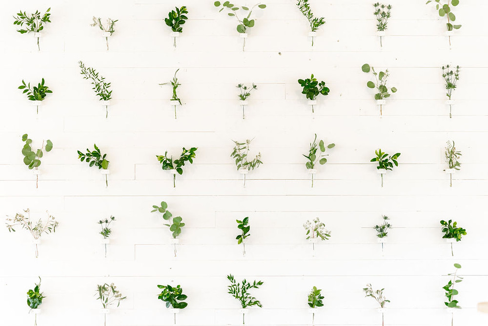 white wall decorated with individual plants all spaced out evenly. flower wall at prospect house
