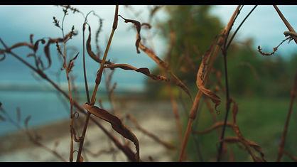 Untitled_1.4_edited.jpg