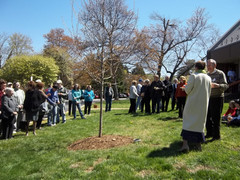 Planting a new tree