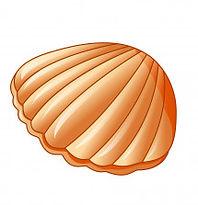 sea-shells-and-sea-star_43633-28.jpg