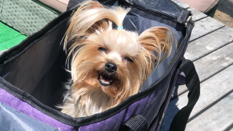 Small dog carry bag