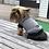 Thumbnail: My pet jumper