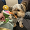Thumbnail: Doggy cocktail Toy