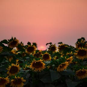 fireflowerhdr_tres-2.jpg