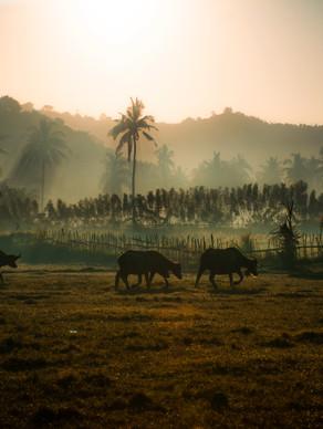 Lombok2020.jpg