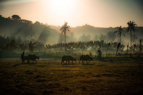 Lombok Rise