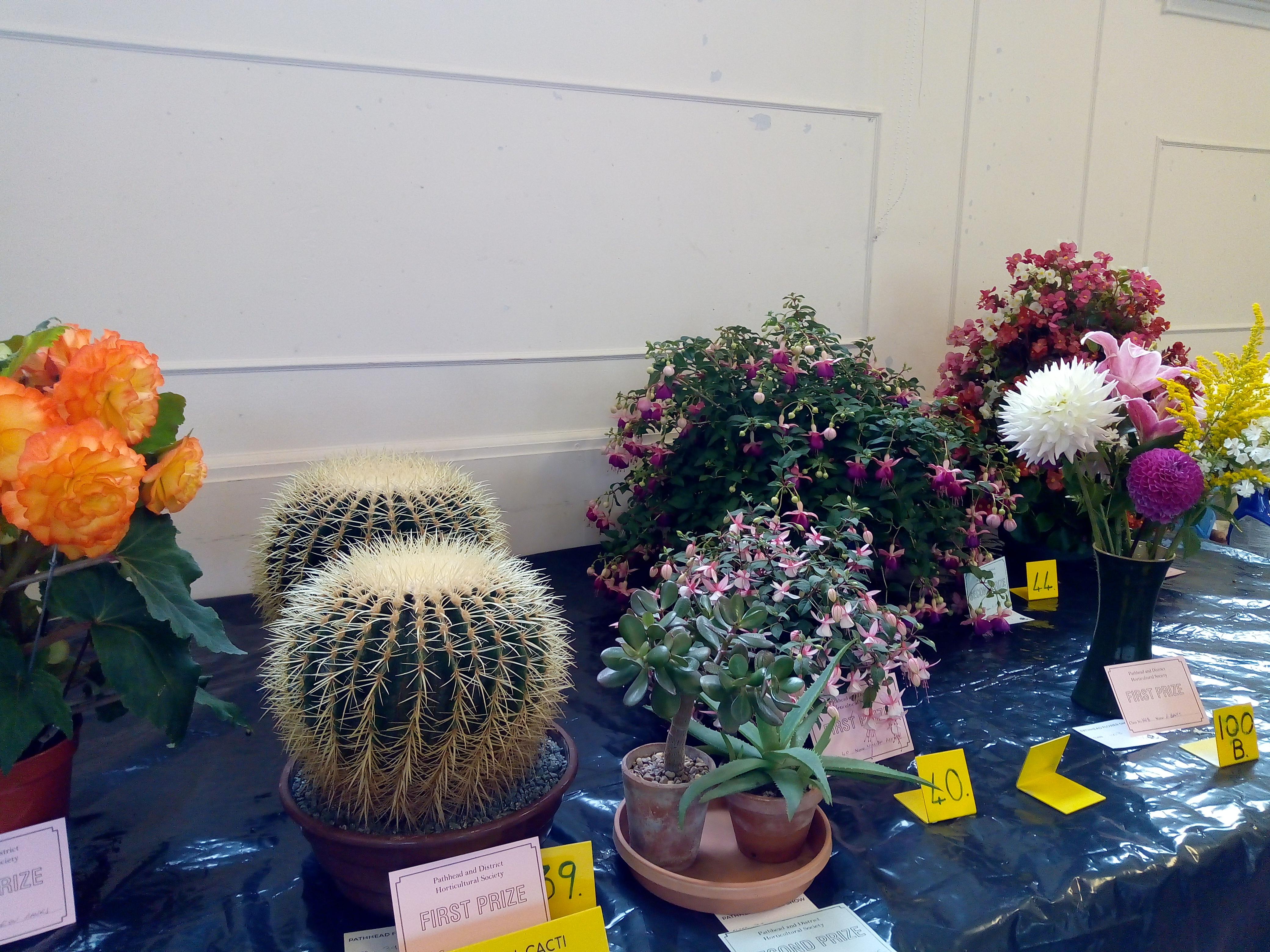 Open Classes - Cacti & Fuchsias