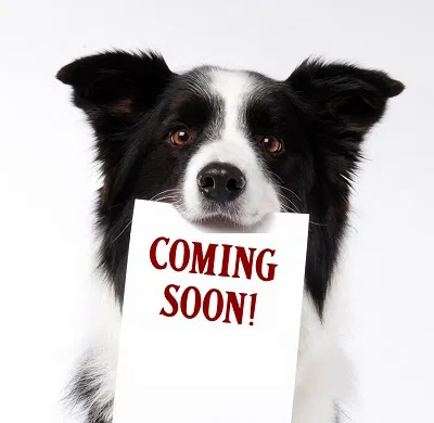 DogComingSoon-1.webp