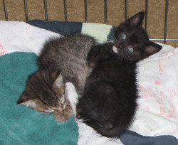 Baby Zippy & his brother, Timbo