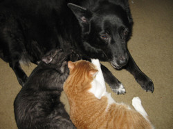 Munchy & Lucky nursing on Kali