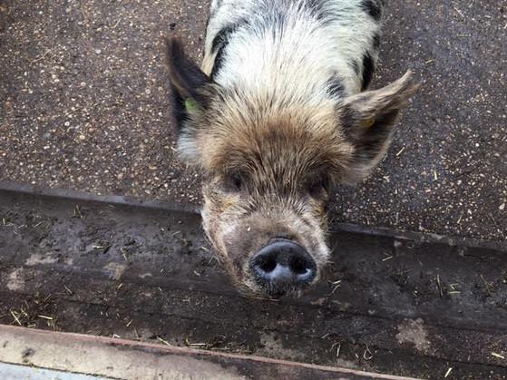 Visiting friends at Vauxhall City Farm
