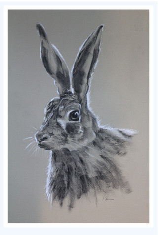 charcoal with white pastel on coloured paper, framed under glass
