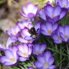 איך לוקחים פרחי באך? כל מה שחשוב שתדעו