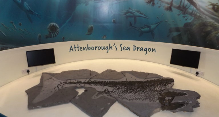 Charmouth Heritage Centre re-opens