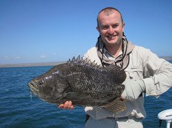 Exmouth tripletail