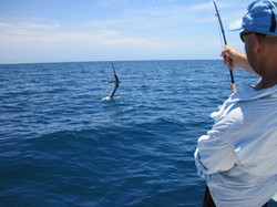 Sailfish hookup