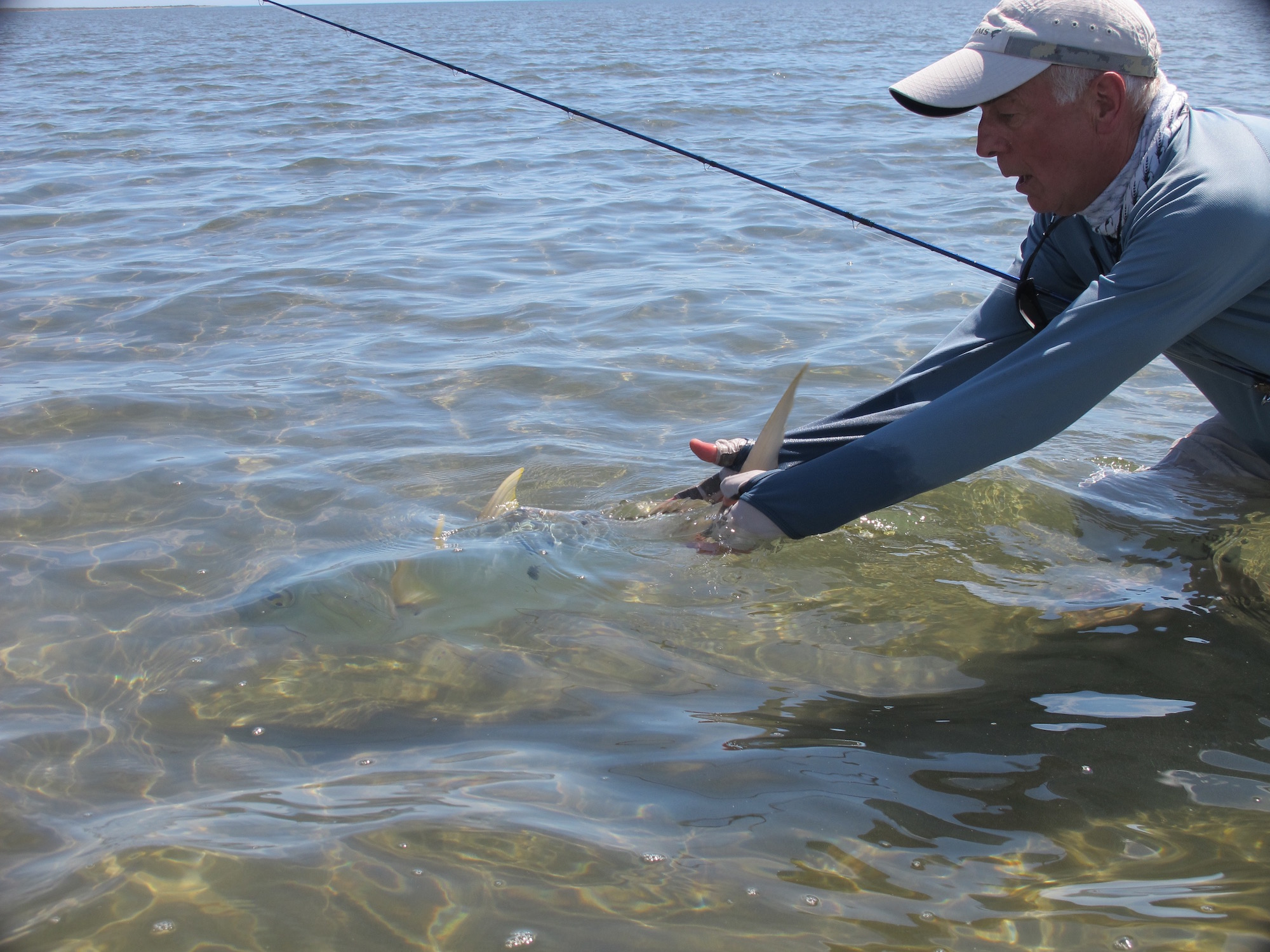 Golden trevally release