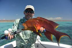 Ningloo coronation trout