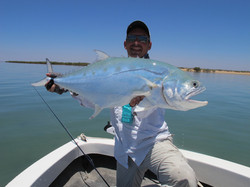 Exmouth queenfish