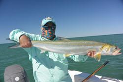 Exmouth giant herring