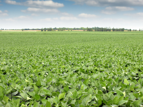 New Soybean Company to Schedule Investor Meetings